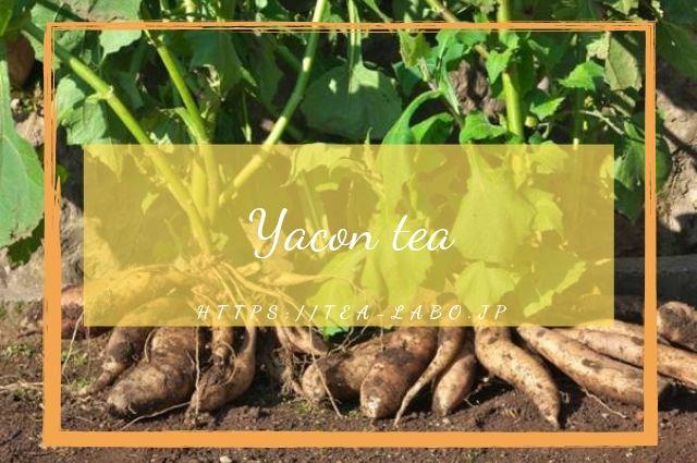 茶 効能 ヤーコン